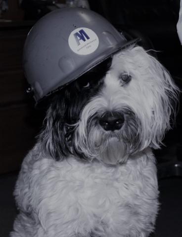 Duke AMC Dog